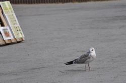 Ingen dag vid Plaskdammen utan fåglar i publiken.